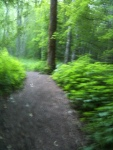 1 trail