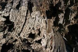Tree rings of a petrified log