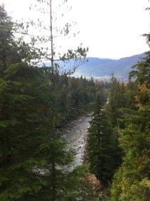 Creek through trees